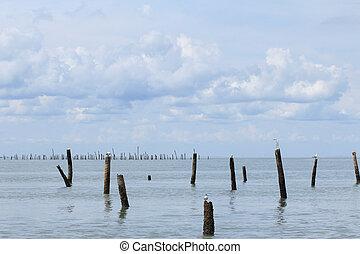gaviotas, en orilla, de, el, tailandés, golfo
