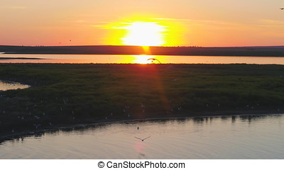 gaviotas, pájaro, mosca, sobre, el, río, en, ocaso, time., aves, mosca, en, sunset., ocaso, en, el, río, aéreo