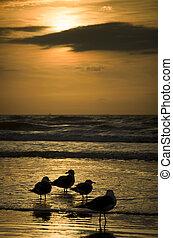 gaviotas, playa, silhouetted