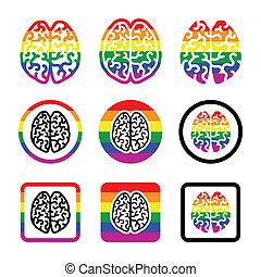 gay, cerveau humain, icônes, ensemble, -, arc-en-ciel