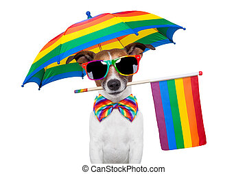 gay dog - dog as gay pride dressed up