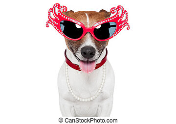 gay dog with funny shades