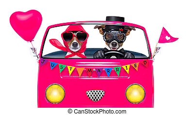 gay pride couple marriage - couple of two dogs driving a ...