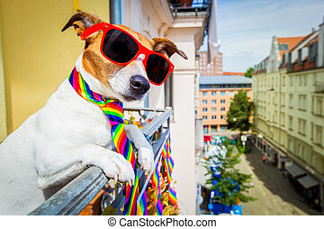 gay pride dog - crazy funny gay dog proud of human rights...