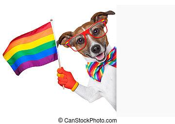 gay pride dog waving a rainbow flag behind banner