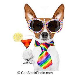 gay pride dog with rainbow