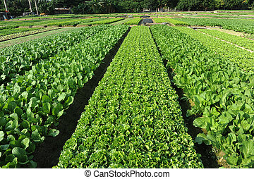gazdálkodás