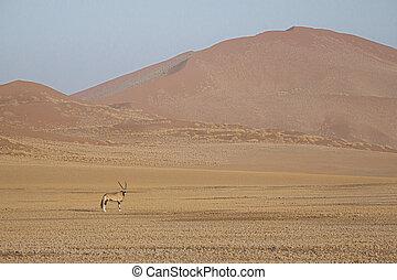 gazella, dunas, namib-naukluft, namibia, arena, oryx, gemsbok, parque nacional