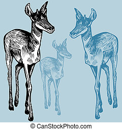 Mignon regard gazelle illustration figure curieux sien - Gazelle dessin ...