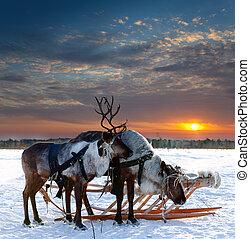 Gazelle in the South Pole