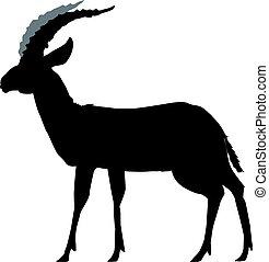 gazelle - silhouette of gazelle