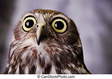 Owl gazing out into the distance