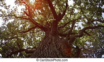 Gazing Upward against the Trunk of a Tree, with Sound