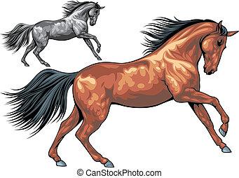 geïllustreerd, paarde