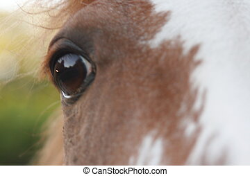 geïnspireerde, paarde