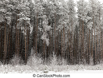 geada, em, a, árvores