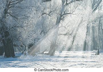 geada, inverno