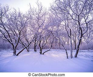 geada, inverno, neve, luz solar, através, árvores, floresta