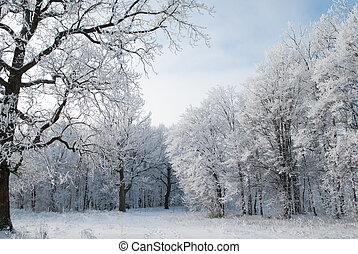 geada, paisagem, árvores inverno