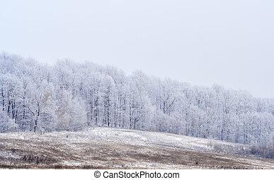 geado, nebuloso, paisagem
