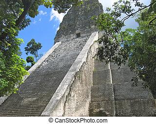 gebäude, haupt, maya, einige, baum, guatemala, dschungel, altes , tikal, ruinen