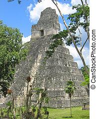 gebäude, haupt, maya, peten, dschungel, guatemala, altes , tikal, ruinen