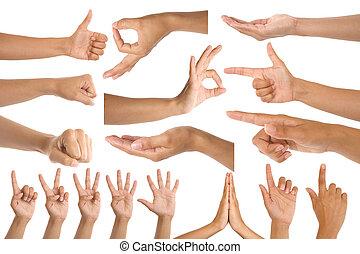 gebaren, vrouw, hand