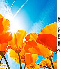 gebied van bloemen, met, blauwe hemel, macro, aanzicht