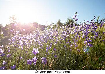 gebied van bloemen
