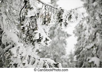 geblazen wind, sneeuw, detail
