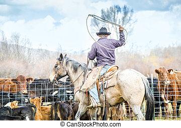 geboren, neu, fangen, kälber, cowboys