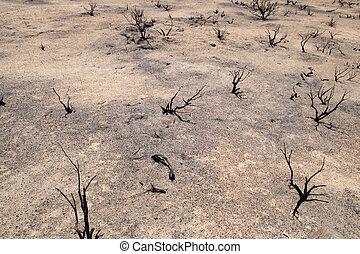 gebrande, woestijn