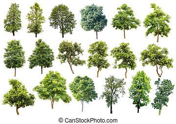 gebraucht, architecture., freigestellt, bäume, tropische , hintergrund, sammlung, weißes, design, werbung