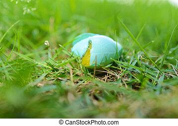 gebroken ei, vogel