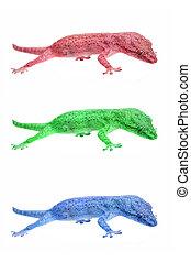 gecko, トカゲ, 小さい
