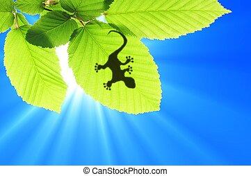 gecko, 影, 上に, 葉