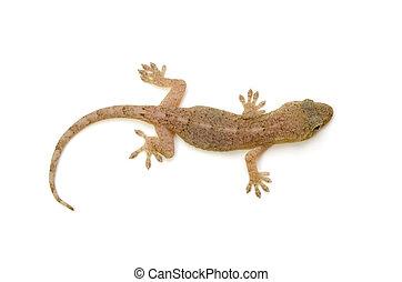 gecko, 日本語