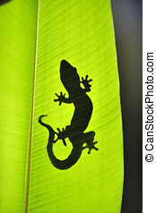 gecko, 自然