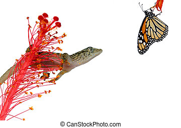 Gecko hunting butterfly