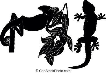 gecko, caméléon
