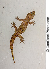 Gecko climbing on white wall