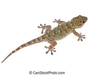 Gecko close-up - A close up gecko reptile climbing a wall