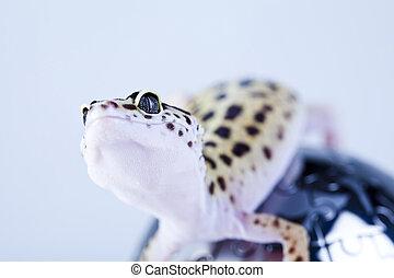 Gecko in globe, bright colorful vivid theme