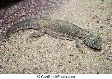 Gecko in its natural  habitat