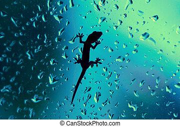 Gecko On Glass Window Wet With Rain Drops - Macro closeup of...