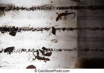 Gecko on plastic roof