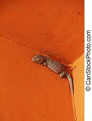 Gecko on the wood wall