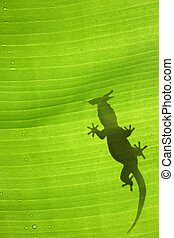 Gecko Silhouette - Green jungle leaf with gecko on top