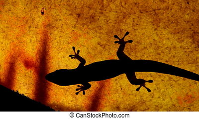 Gecko gets chased away from a smaller gecko on a semi-opaque ceiling, with shadows of leaves