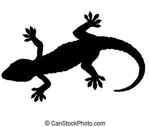 gecko, silueta